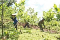 Qua con số thống kê: Bàn giải pháp quản lý, phát triển rừng bền vững thời gian tới