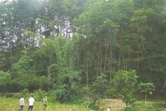 Qua con số thống kê: Mức khoán bảo vệ rừng còn thấp
