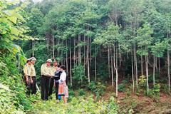 Qua số liệu thống kê: Thực trạng quản lý và phát triển rừng Việt Nam