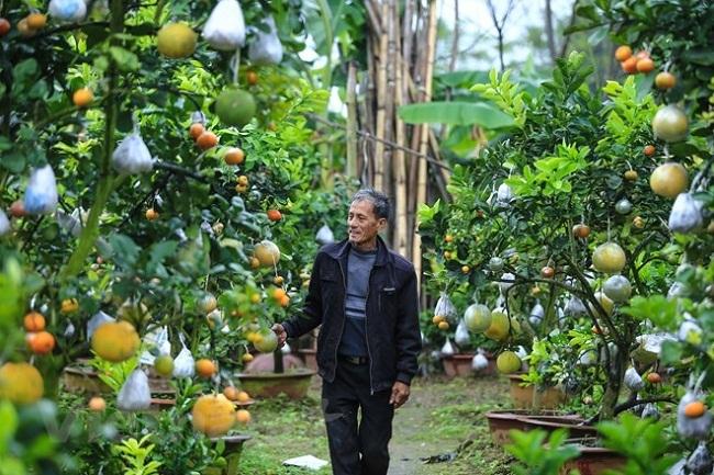 Vườn cây bạc tỷ 'Thập toàn thập mỹ' của lão nông hút khách mỗi dịp Tết về