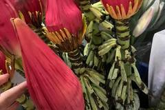 Loài hoa đỏ tươi, to như bắp chân: Hàng Tây Bắc, dân Hà thành chơi Tết