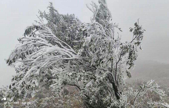 Băng tuyết tuyệt đẹp phủ trắng đỉnh Yên Tử, Mẫu Sơn
