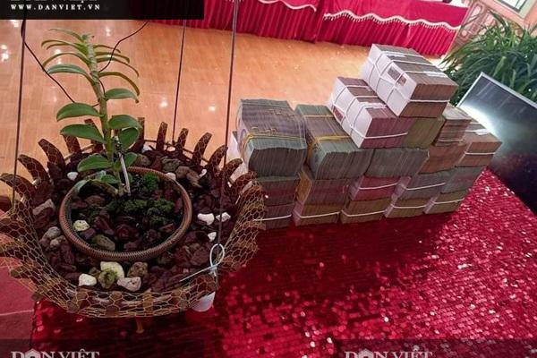 Xôn xao vụ chuyển nhượng lan đột biến Phi điệp Hồng Hạ Vân trị giá 5,5 tỷ đồng