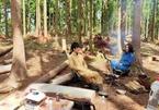 Đại gia chi tiền mua đảo hoang, vào rừng 'trú ẩn' để chống dịch Covid-19