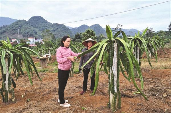 Son La combines tourism and agriculture