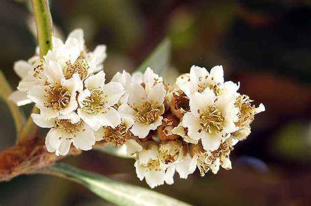 Quả chỉ có giá 100 nghìn/kg mà hoa bán được tới hàng triệu/kg