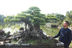 Cây lạ có 5 thân, lá đột biến của đại gia Hà Nội gây choáng vì mức giá 'trên trời'