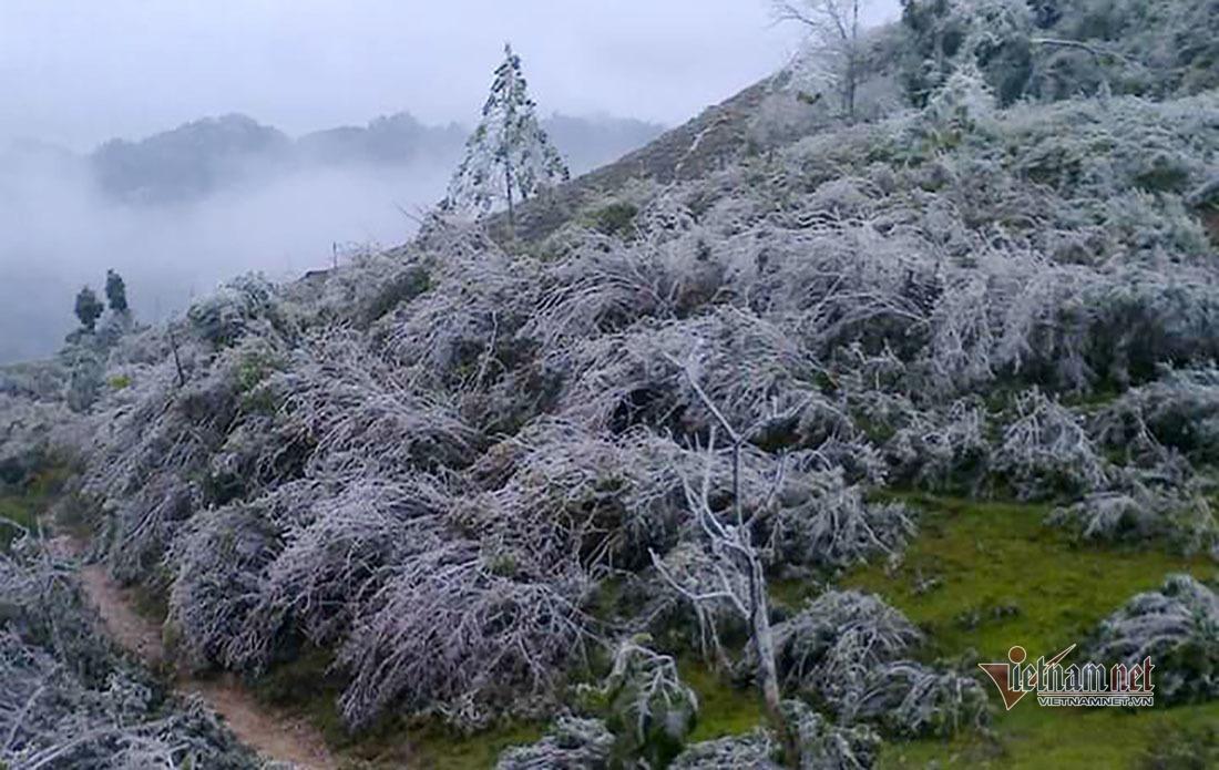 Hàng trăm con trâu bò thả rông ở Nghệ An chết rét trong rừng