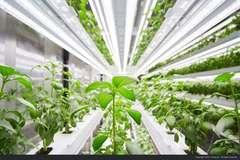 Thăm nông trại tương lai trong lòng container