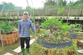 'Choáng ngợp' vườn bonsai 'khủng' ở Đồng Tháp