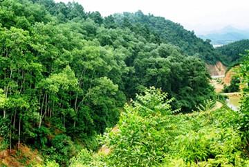 Việt Nam chủ động, tích cực đóng góp vào nỗ lực chung về ứng phó với biến đổi khí hậu và phục hồi xanh
