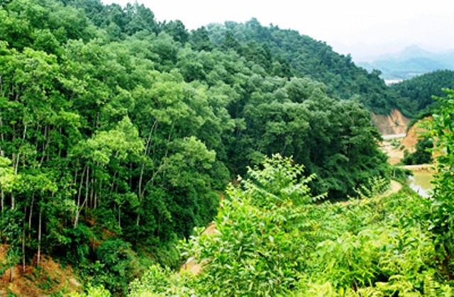 Đẩy mạnh dịch vụ môi trường rừng cho mục tiêu phát triển bền vững