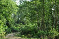 Tăng cường quản lý, bảo vệ rừng để phát triển rừng bền vững