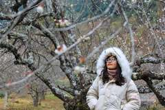 Sơn La kiến nghị Thủ tướng cho phép truy xuất nguồn gốc cây đào