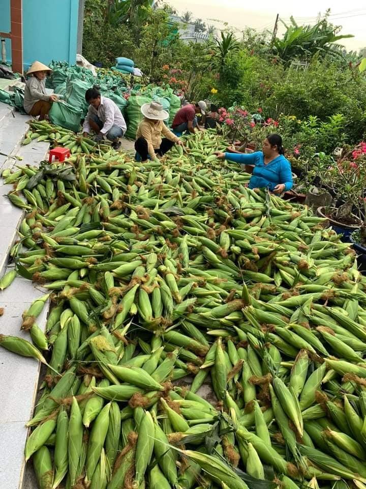 Vợ chồng trẻ Hà Nội vào Sài Gòn mở vựa buôn ngô, thu 30 triệu/tháng