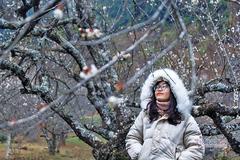 Nhiều tỉnh khẳng định mua bán đào trồng dịp Tết không có trở ngại gì