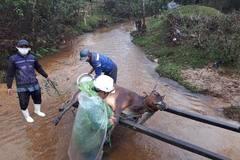 Gần 500 con trâu bò ở miền núi Thừa Thiên Huế chết rét