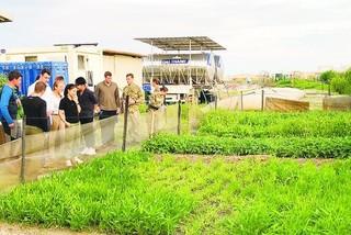 Growing vegetables in Africa, Vietnamese solders respected by international friends