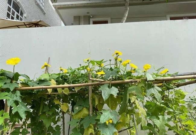 biet thu day hoa cua dien vien quy binh va ba xa doanh nhan 13 Sao Việt hôm nay 25/2: Phút bình yên của Chí Trung và bạn gái ở quê