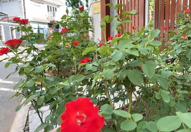 biet thu day hoa cua dien vien quy binh va ba xa doanh nhan 4 Sao Việt hôm nay 25/2: Phút bình yên của Chí Trung và bạn gái ở quê