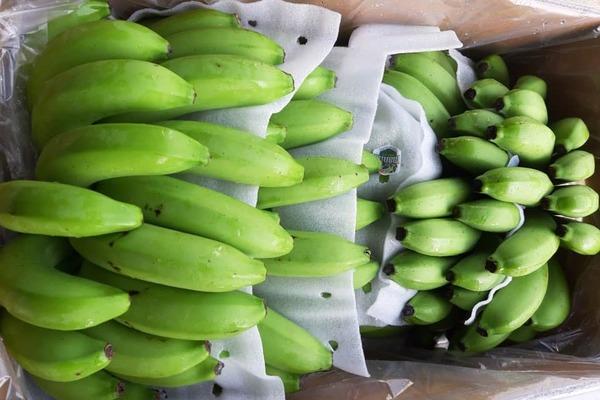 Bỏ 25 triệu đồng mua cả vườn chuối, tiểu thương thắng đậm gấp đôi khi bán 10 ngày Tết