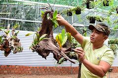Thu tiền tỷ từ lan rừng
