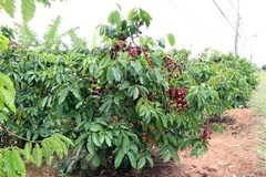 Difficulties still ahead for coffee sector: insiders