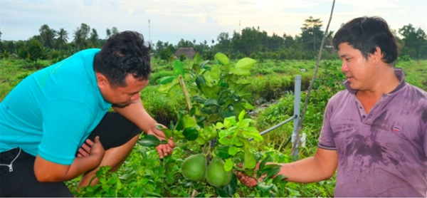 Farmer fixes salty soil to plant fruit for export