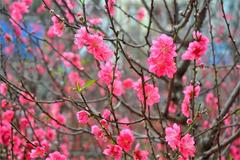 Những kiêng kỵ trong ngày Lập Xuân