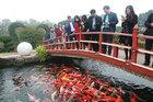 Hồ cá Koi sử dụng nhiều đá bán quýlớn nhất Việt Nam