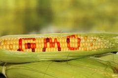 3 bộ vào cuộc trước lo ngại thực phẩm biến đổi gen ở Hưng Yên