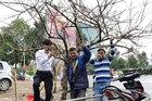Người dân Nghệ An được tự do buôn bán đào như mọi năm