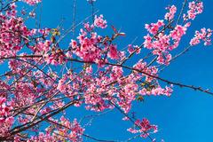 Bài văn khấn gia tiên ngày mùng 2 Tết Tân Sửu