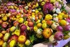 Hoa cúc lạ chết khô vẫn không tàn: Hàng Tàu chơi Tết Tân Sửu