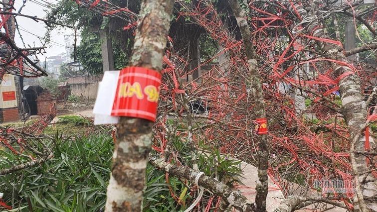 Sơn La nhận 100.000 tem truy xuất nguồn gốc, người trồng đào yên tâm buôn bán