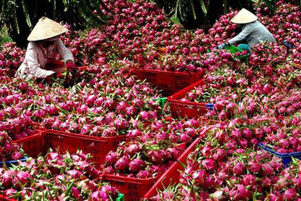 Trung Quốc siết chặt, Việt Nam tăng cường giám sát hàng hóa qua bên kia biên giới