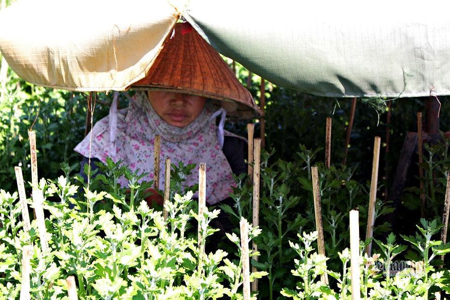 flower village,Covid-19,growing area,social news