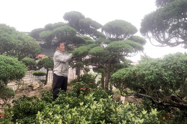 Lão nông để vài tỷ trong vườn ở làng cây cảnh cổ nhất Việt Nam