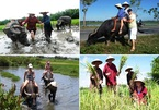 Tourists do field work, Hoi An locals make a fortune