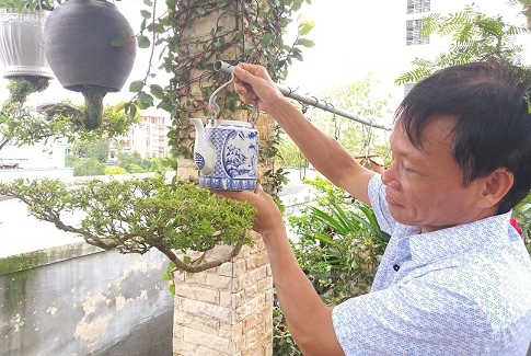 Less is more for lovers of bonsai