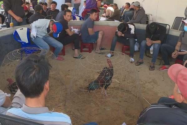Gần 50 người tổ chức đá gà, cá cược bằng bia và thuốc lá