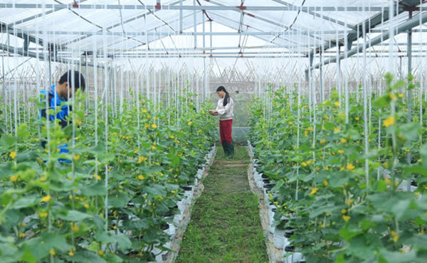 Agriculturalproduction,Hanoi