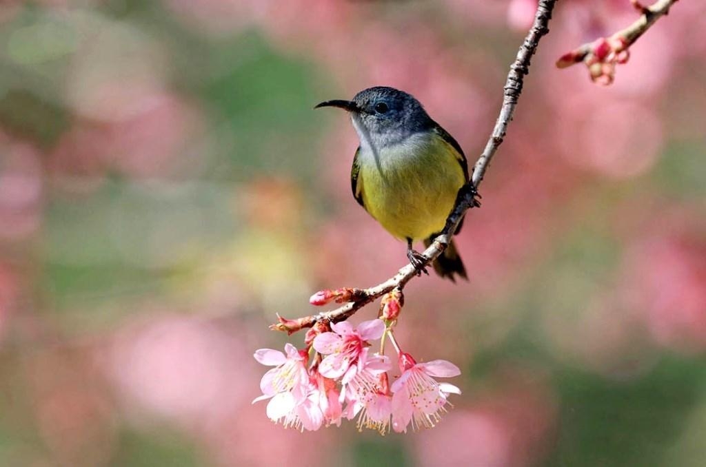 spring,Tet,Lang Biang Plateau,Da lat travel