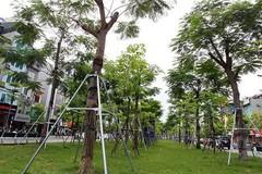 Trồng 1 tỷ cây xanh, đề án chính thức trình lên Thủ tướng