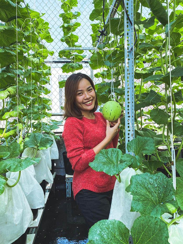 Vườn dưa trĩu trái trên sân thượng của ông chủ Sài Gòn