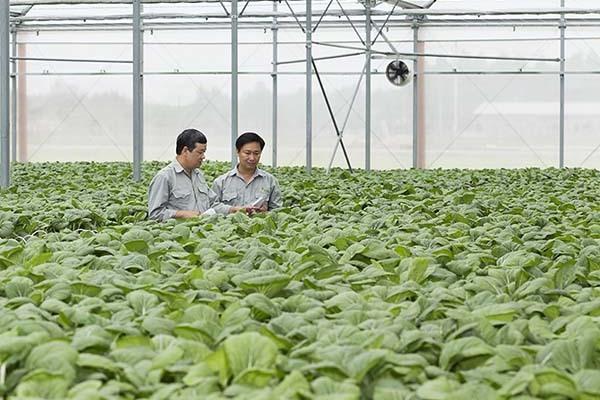 Điều khác biệt để nông dân Nhật thu 40.000 USD, Việt Nam chỉ 1.000 USD