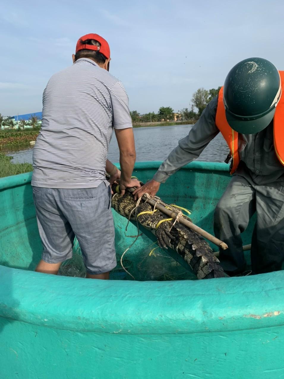 Đã vây bắt được được cá sấu ở hồ nước điều hòa Vũng Tàu