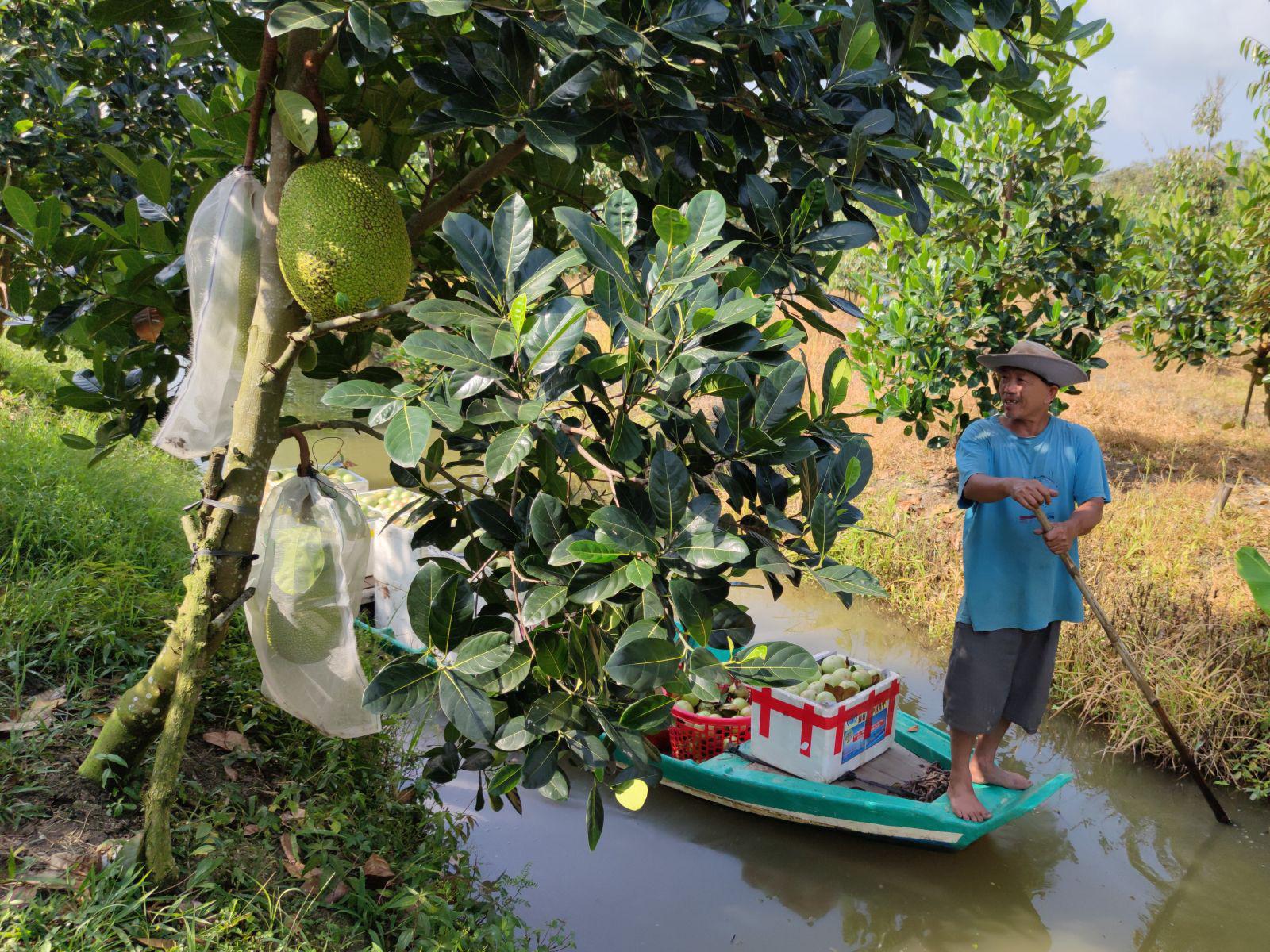 Hoa Trung Quốc tràn chợ Việt, lan Nhật giá tiền triệu đổ về