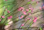 Ngày Lập Xuân, chọn hướng nào xuất hành để cả năm thuận lợi?