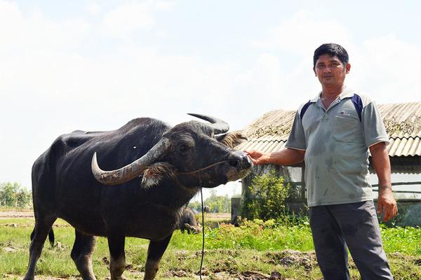 "Millionaire story of a ""buffalo boy"""